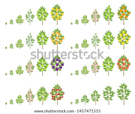 fruit tree growth stages set
