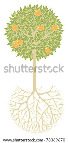 Fruit tree with leaves, fruits, branches and root system