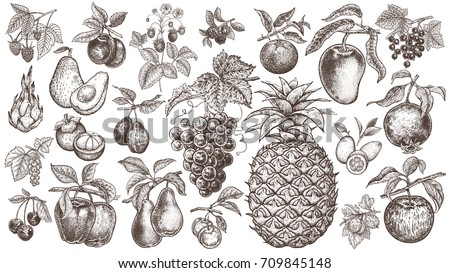 Fruits and berries. Set of isolated realistic objects of nature for kitchen design, decoration food packaging, signs of shops, markets. Black and white. Vintage. Vector illustration art. Hand drawing