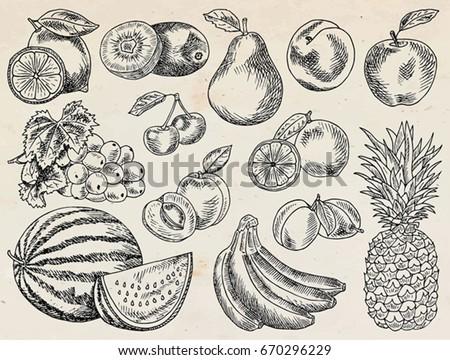 fruits menu  summer garden