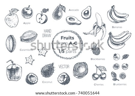 Fruits set. Hand drawn vector. Sketches of tropical fruits from A to C for design of juice packages & smoothie recipes. 1 of 5 parts