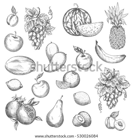 Fruits sketch. Vector isolated icons of melon and watermelon, tropical pineapple and kiwi. Sketched juicy grape bunch, apricot, pomegranate, pear and apple. Fresh lemon, banana.