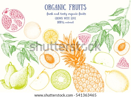 Fruits top view frame with pear, pineapple, kiwi, pomegranate, apple, peach. Farmers market menu design. Healthy food poster. Vintage hand drawn sketch, vector illustration. Linear graphic.