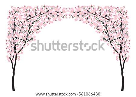 full bloom pink sakura tree