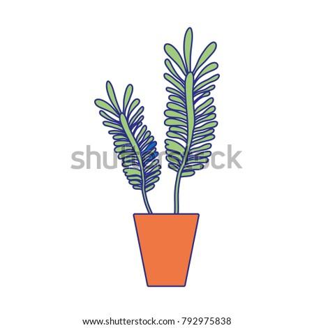 full color naturals plants