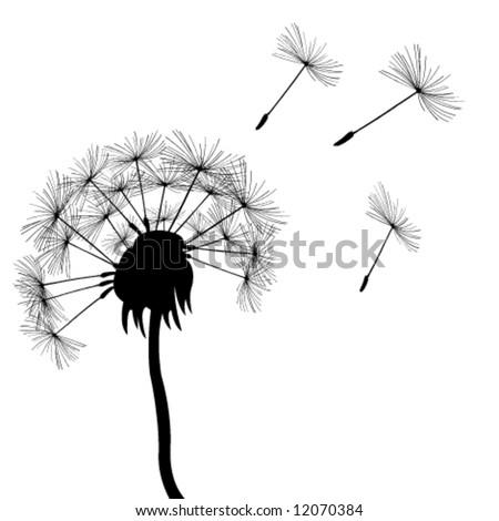 full dandelion in the wind - stock vector