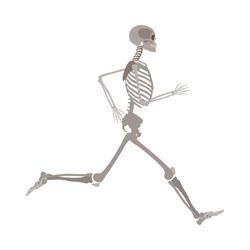 Full-length running human skeleton cartoon flat style, vector illustration isolated on white background. Anatomy of male or female skeleton during jogging or run sports exercise