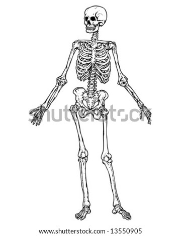 full skeleton vector