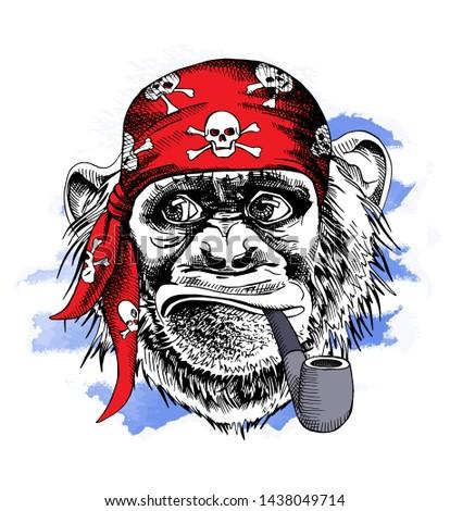 fun monkey in a red pirate