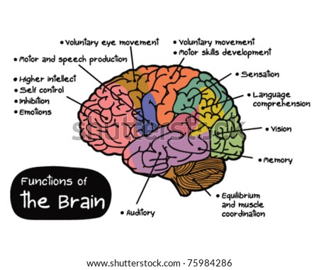 Royalty-free The human brain. language-processing… #235483330 Stock ...
