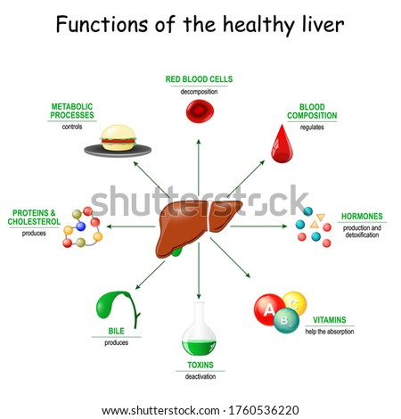 Functions of the healthy liver. From detoxification, and deactivation of poisons and toxins, to synthesis of bile, proteins, Amino acids and cholesterol. metabolism. Stock photo ©