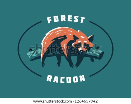 funny and cute raccoon  lies