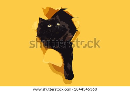 funny black cat ripped yellow