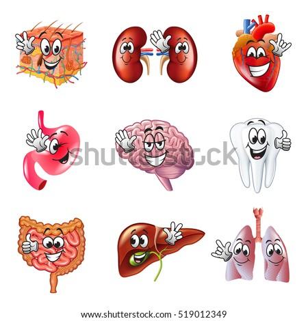 funny cartoon human organs