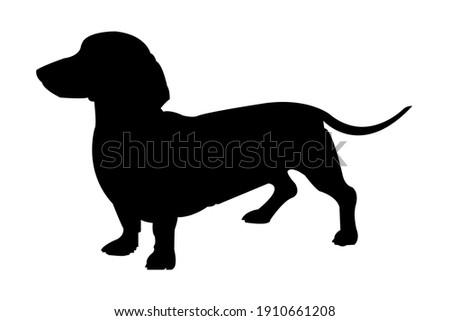 Funny Dachshund Dog Vector Art Сток-фото ©