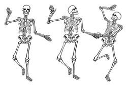 Funny dancing skeletonsisolated on white background. Vector illustration, set