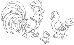 Funny family of a rooster, a cute hen and a little chick, a black and white vector illustration in cartoon style for a coloring book