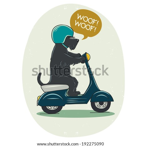 Funny illustration of a cute Scottish terrier riding old school blue scooter Hand drawn cartoon dog on a motorbike