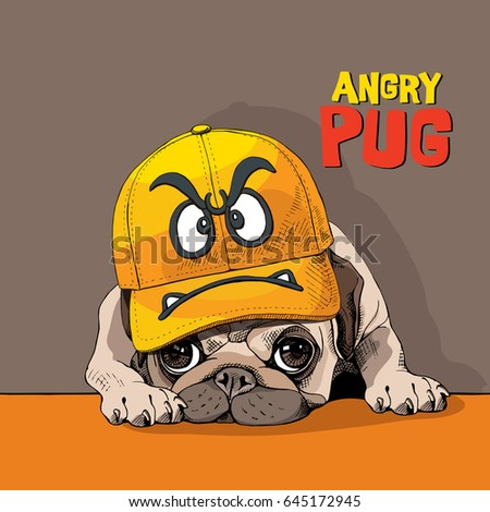 funny pug in a yellow cap with