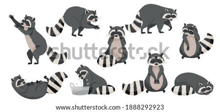 Funny Raccoon with Dexterous Front Paws and Ringed Tail Vector Set Stock photo ©