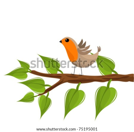 funny robin bird on the tree