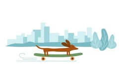 Funny sausage dog, basset on a skateboard in a city, banner, card. Flat vector drawn illustration, isolated objects.
