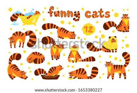 funny shy cats  set of
