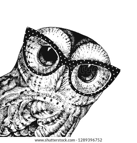 funny wise owl wearing glasses