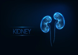 Futuristic glowing low polygonal human kidneys made of lines, light particles  isolated on dark blue background. Internal organs medical research concept. Modern wire frame design vector illustration.