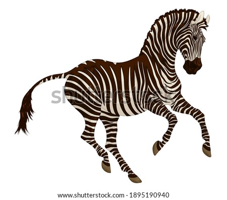 Galloping plains zebra pricked up its ears and looks with interest.  Color illustration of a striped stallion. Vector emblem, design element for african wildlife tourism.