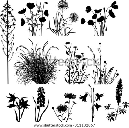 garden and wild plants