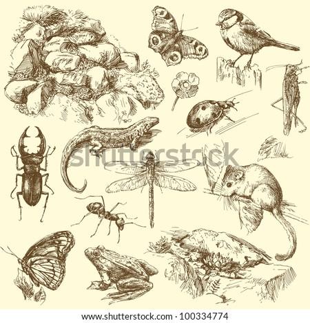garden animals   hand drawn set