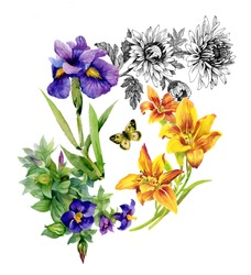 Garden Lily, Iris, African Violet, Saintpaulia flowers watercolor pattern with butterflies on white background vector illustration