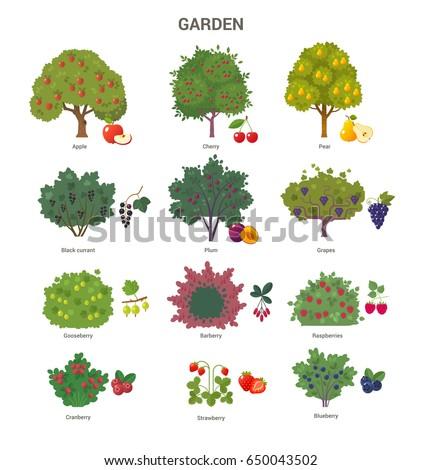 garden trees and shrubs