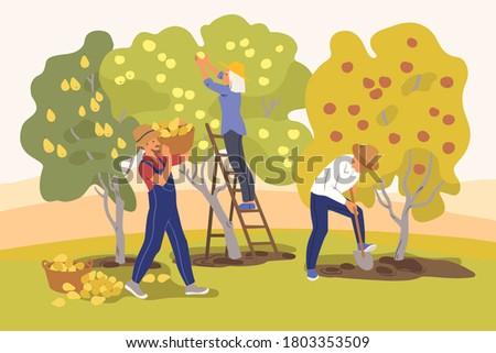 gardeners harvest fruit trees
