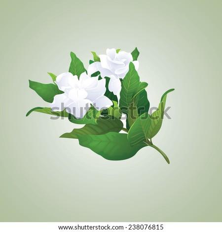 Gardenia branch