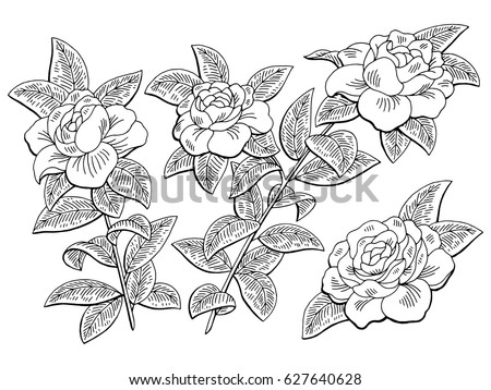 Rose Flowers Drawing With Line Art On White Backgrounds Ez Canvas