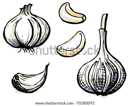 Garlic. Hand-drawn illustration converted to vectors. Pastel effect coloring. Colors are ready to change.