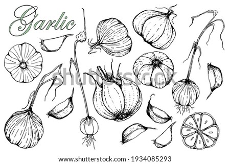 Garlic. Set of hand drawn vector illustrations. Isolated over white background. Sketch. Detailed drawing of vegetarian food. Farmers market product. Design for menu, label, badge, packaging. Stockfoto ©