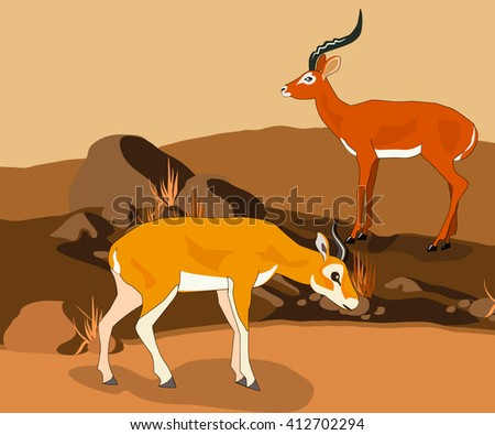 gazelles in the natural