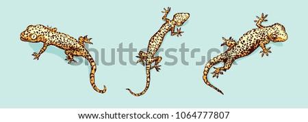 gecko set three geckos