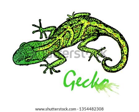gecko small green lizard