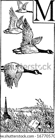 geese are waterfowl of the