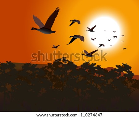 Geese flying low over treetops as sun rises or sets