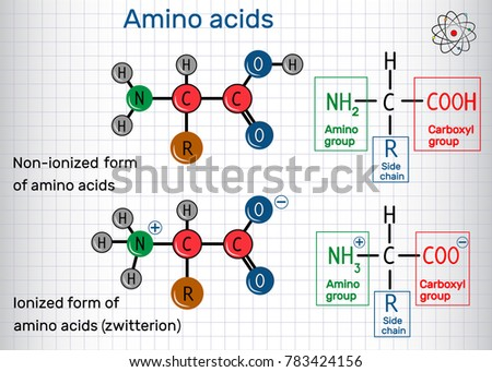 General formula of amino acids, ionized and non-ionized (zwitterion) forms. Structural chemical formula and molecule model. Sheet of paper in a cage. Vector illustration