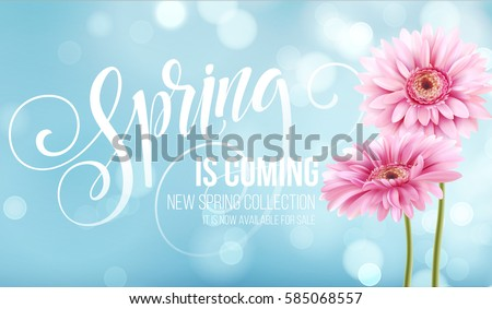 Gerbera Flower Background and Spring Lettering. Vector Illustration EPS10 #585068557