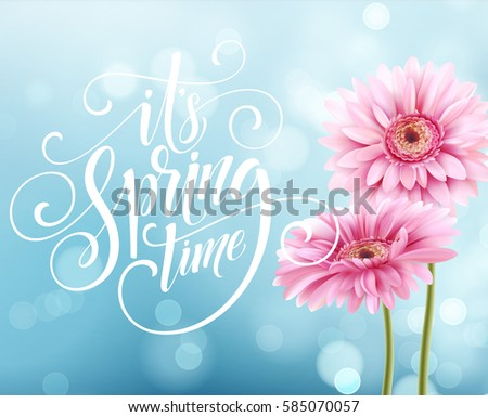 Gerbera Flower Background and Spring Lettering. Vector Illustration EPS10 #585070057