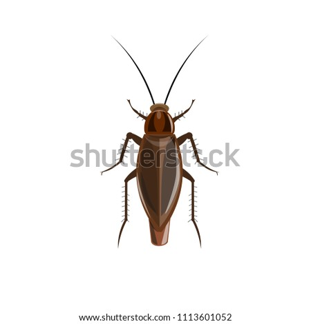 German cockroach. Vector illustration isolated on white background