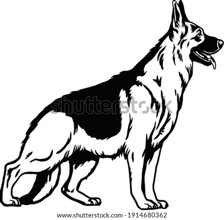 German Shepherd dog pose- vector isolated illustration on white background Photo stock ©