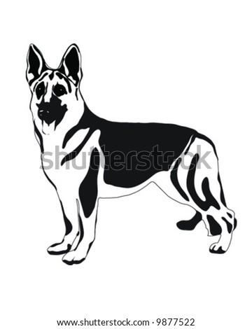 German Shepherd Dog, Vector, Illustration - stock vector